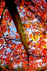 arbre en automne - Maxime JULLIANMTC