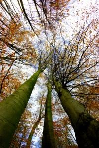 arbres en automne - MTC Maxime JULLIAN